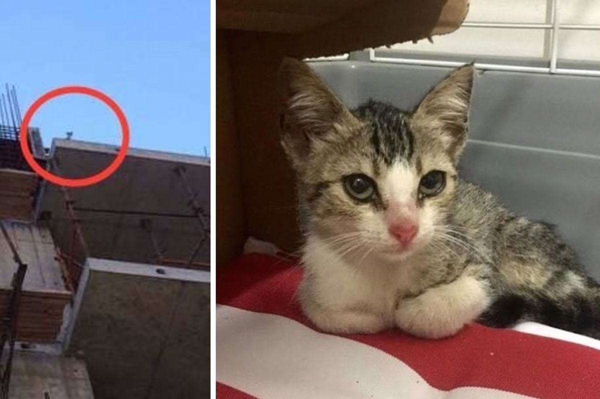 Stray Kitten Stuck on Roof of Building Lost His Meow Calling for Help...