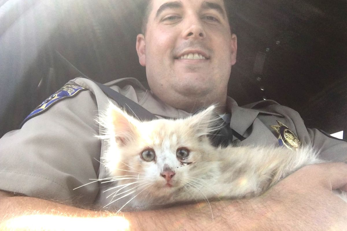 Kitten Found on Golden Gate Bridge Clings to His Rescuer After Being Saved...