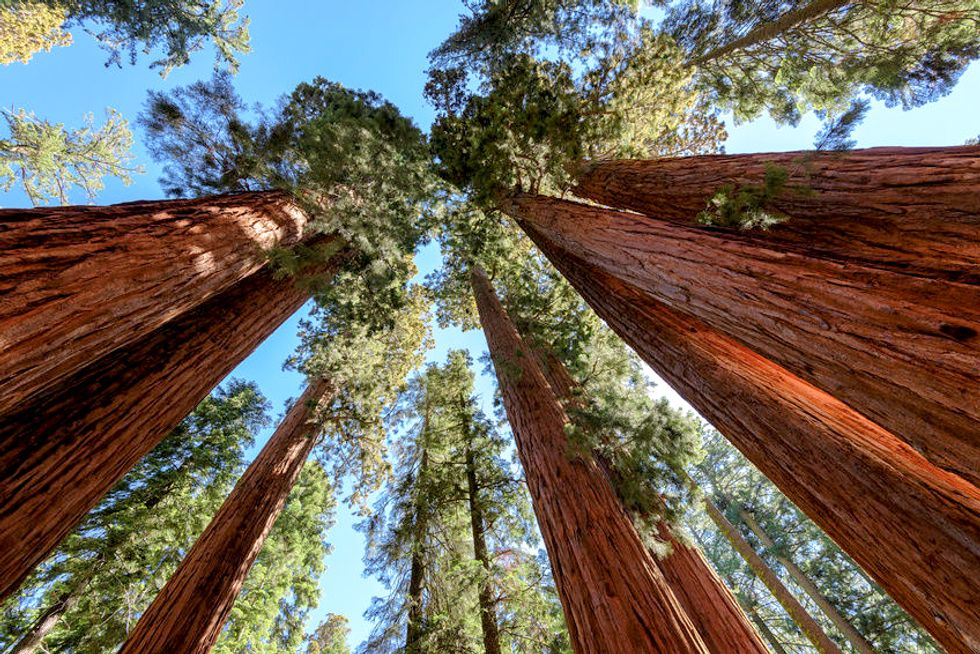 Is Giant Sequoia National Monument Next on the Hit List?