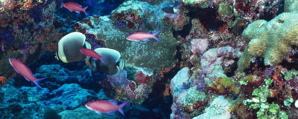 Could Artificial Reefs Save Our Oceans?