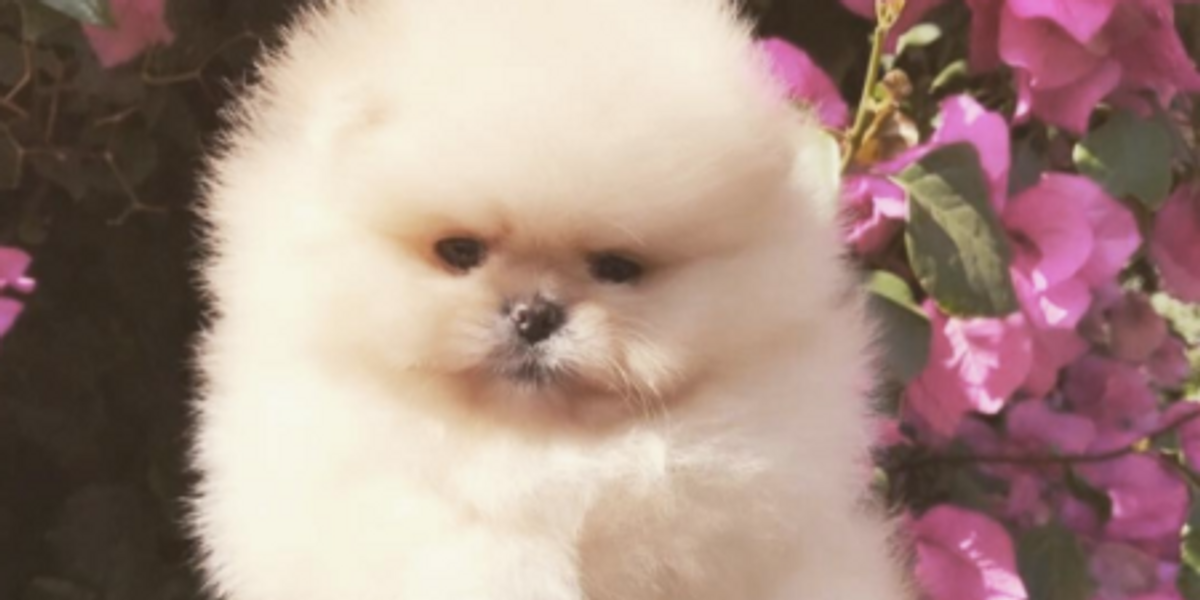 North West's Extremely Cute Puppy Gets Named By the Internet