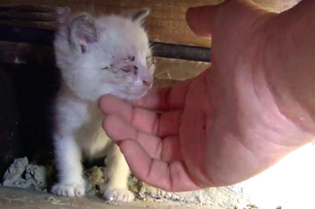 Man Gets Under Stairwell to Save Kittens While Stray Cat Mama Watches from Distance...