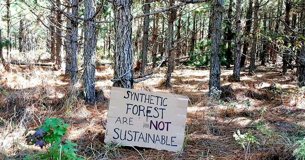 Southeast Is Ground Zero for Genetically Engineered Trees