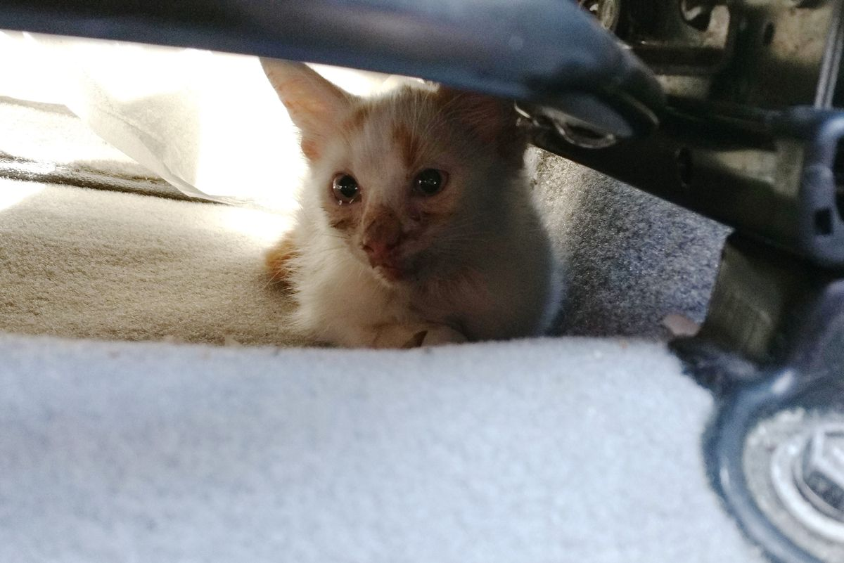 Man Does Everything To Win Over Skittish Kitten He Saved from Busy Street…