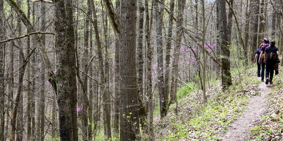 'Government Violating Own Laws to Pave Way for Fracking Plan' in Ohio's Only National Forest