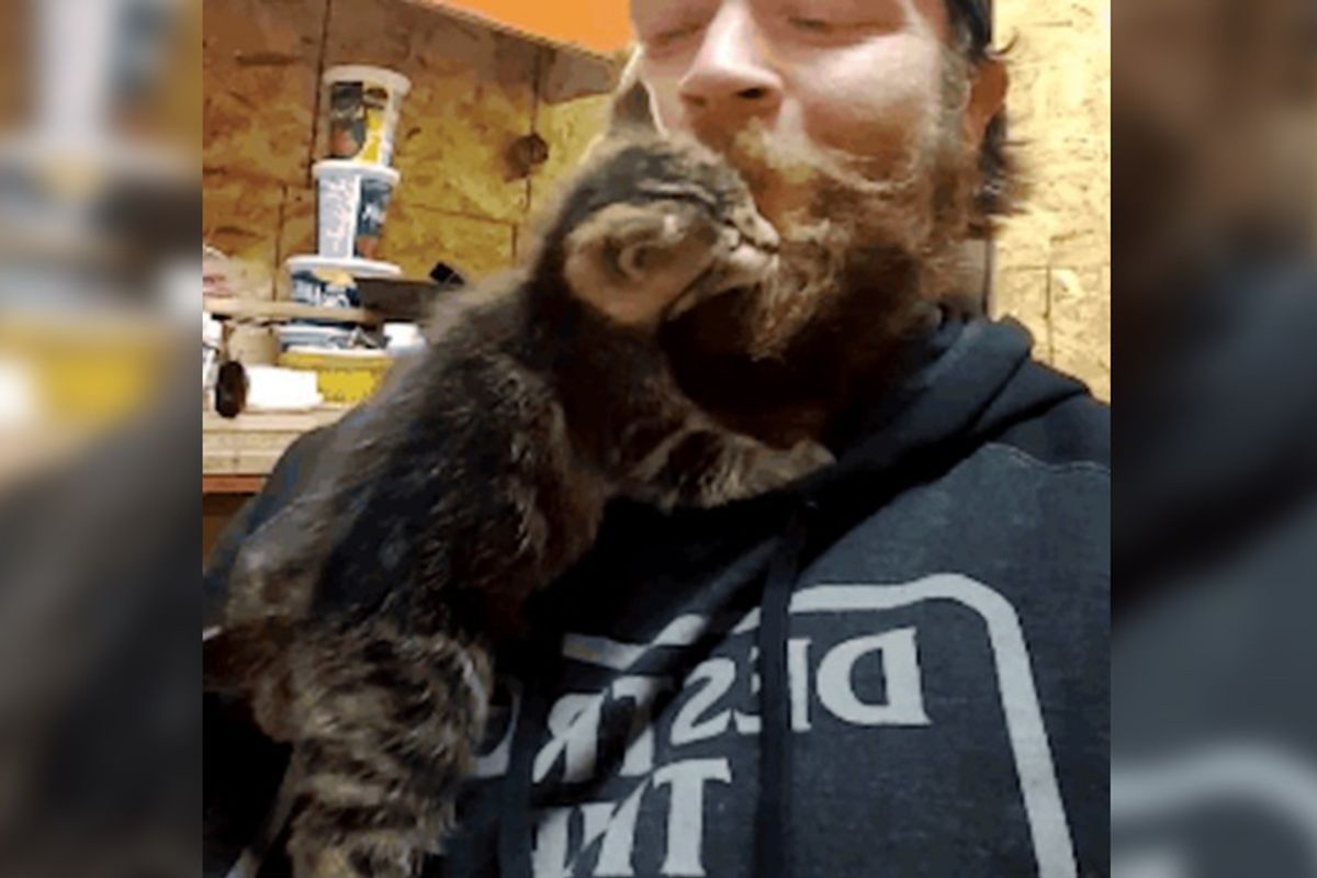 Man Saves Feral Kittens Who Were Terrified of Him But One Week After the Rescue...
