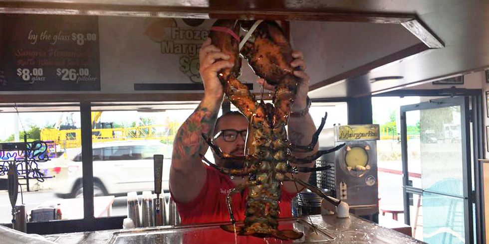 132-Year-Old Giant Lobster Finally Freed After 20 Years in NY City Restaurant