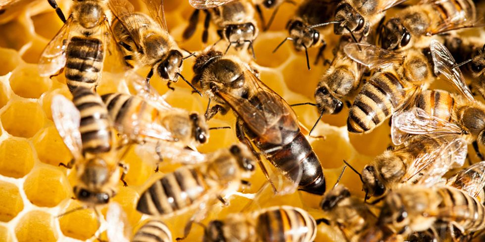 Major New Study Shows Pesticide Risk to Honey Bees