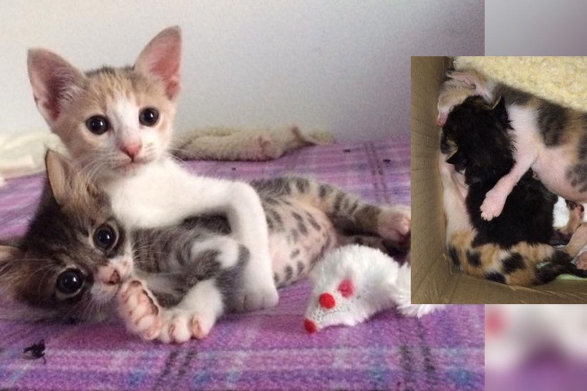 Sister Kittens Wrapped Around Their Little Brother and Save His Life...