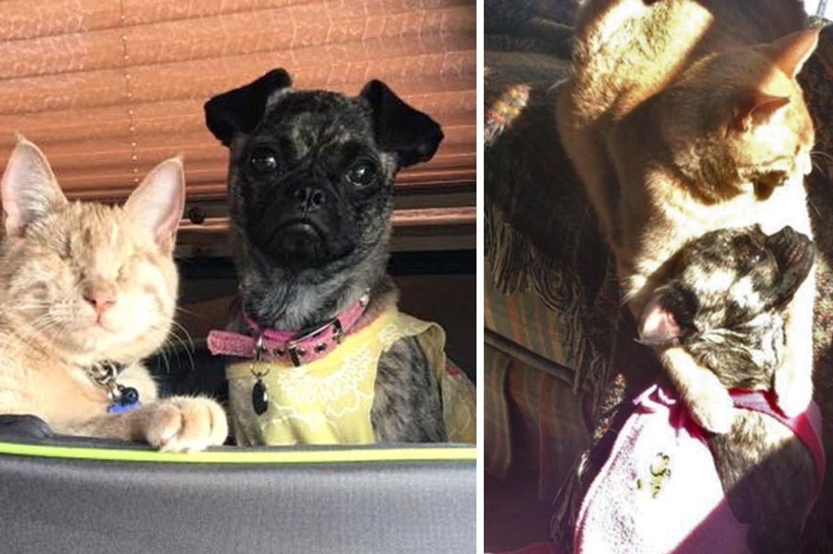 Blind Cat Becomes Guardian Angel to Disabled Dog and Helps Her Find Courage...