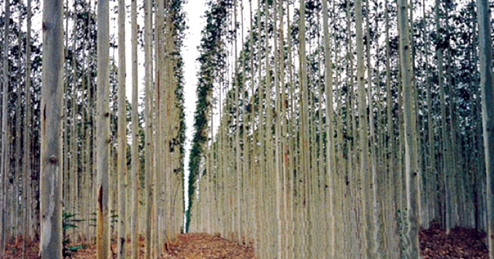 250,000+ Oppose USDA Proposal to Approve First-Ever Genetically Engineered Forest Tree