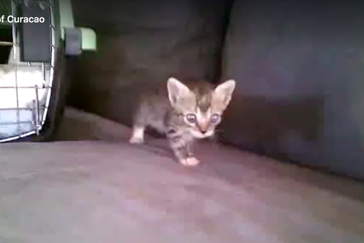 Man Saves Kitten From Drowning and Finds Her Help While Others Walk Away...