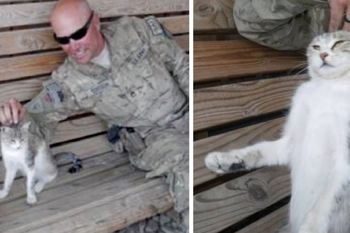 Stray Cat Steals Heart of Soldier Who Refuses to Leave Her Behind...