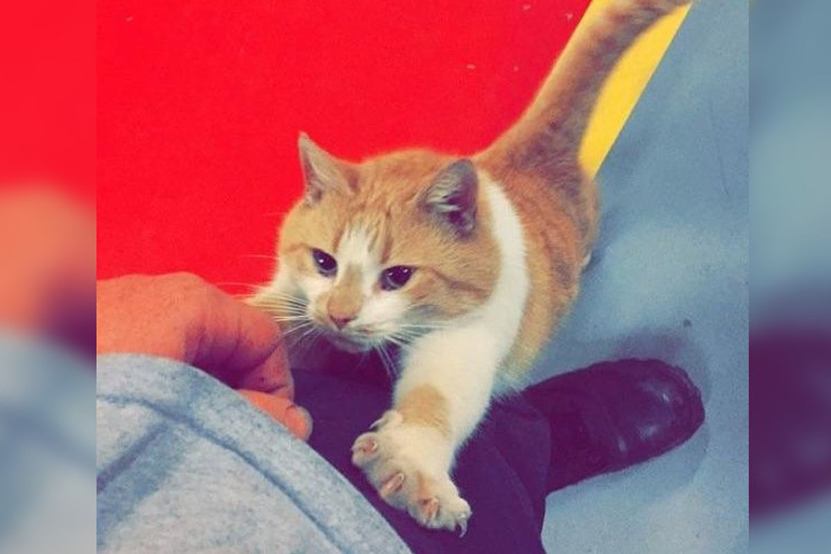Stray Cat Saunters Into Firehouse and Decides the Crew Will Be His Forever Humans...