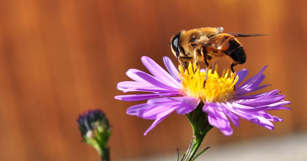 New Evidence Shows Bayer, Syngenta Tried to Influence Scientists on Bee Study