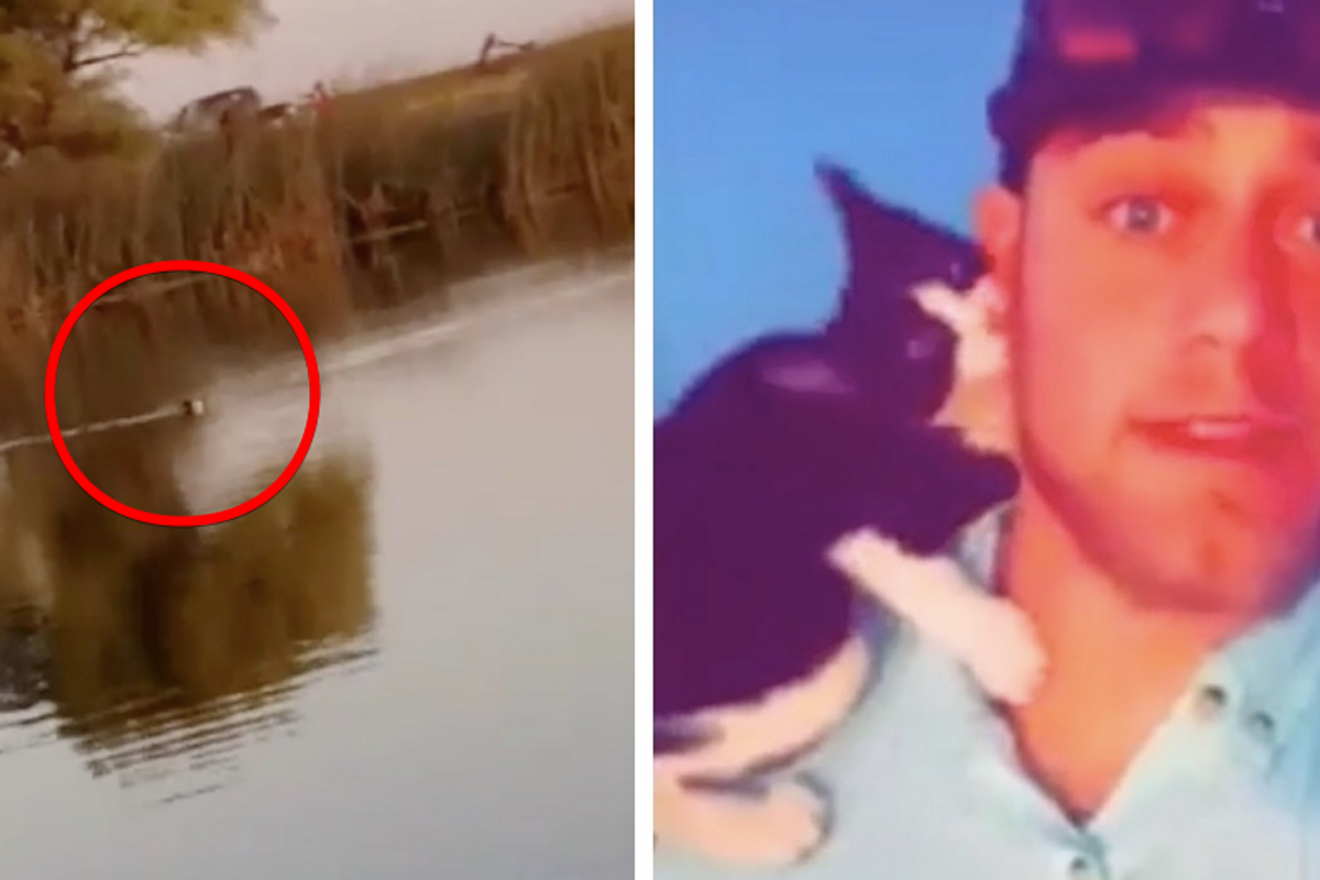 Stray Kitten Swims to Fisherman After He Gave Her Food and Snuggles...
