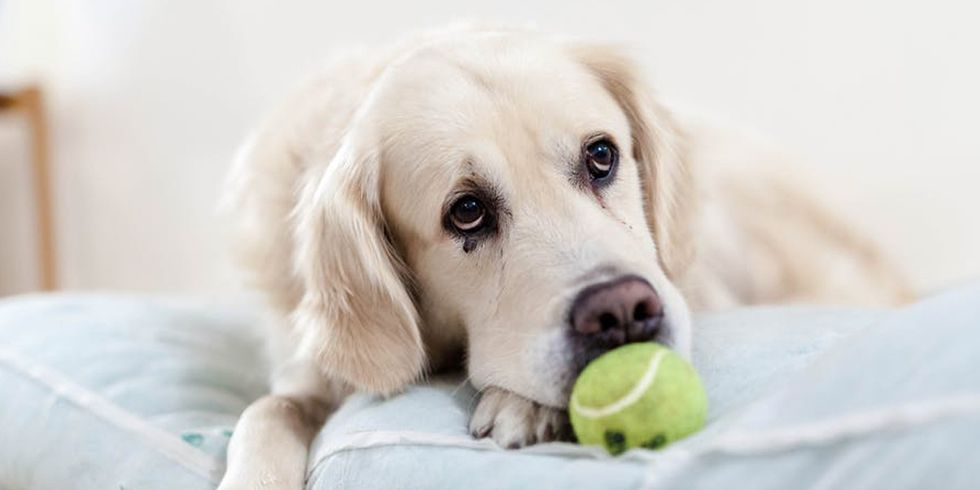 7 Foods That Can Be Fatal to Dogs
