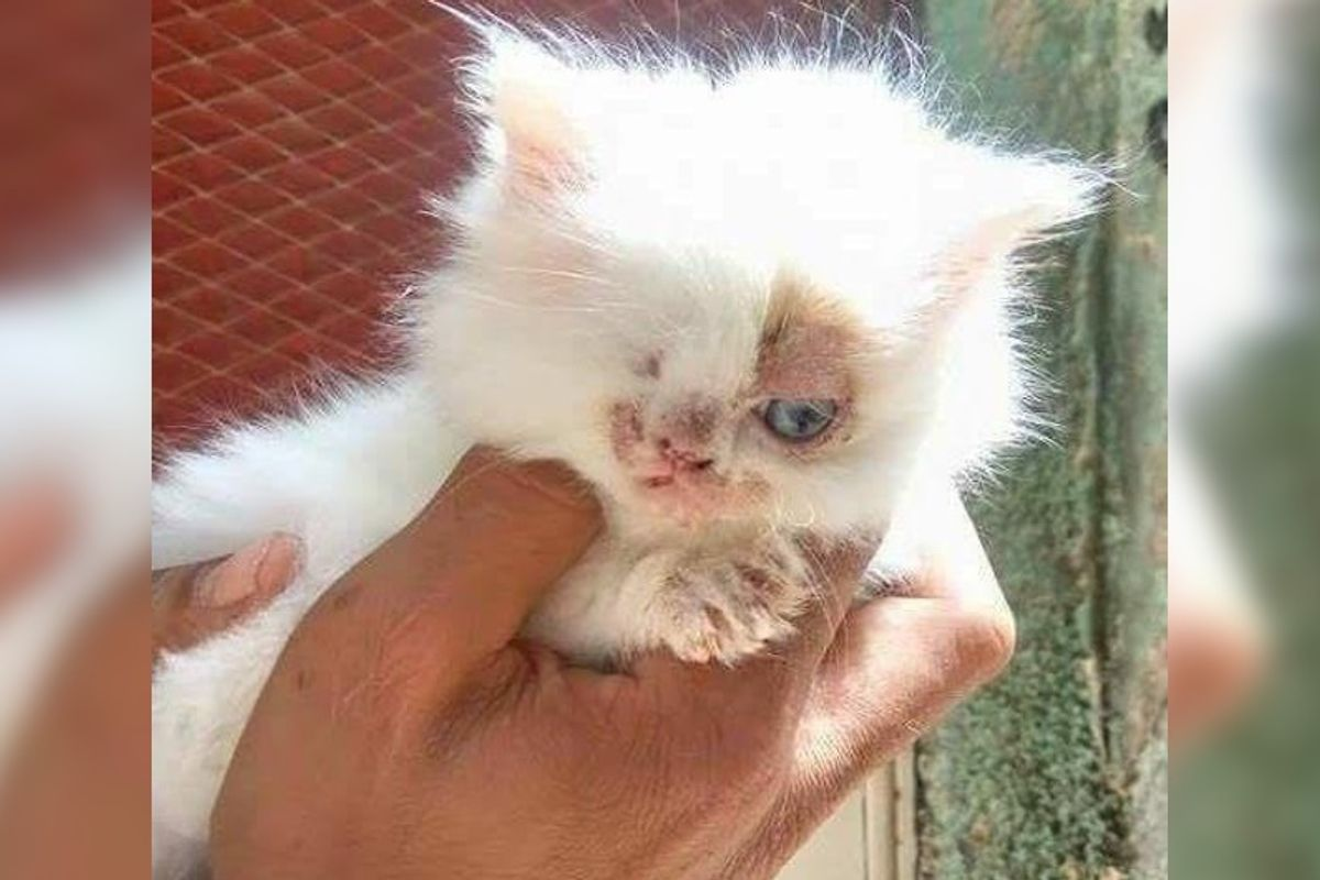 Man Saves One-eyed Kitten from Streets, What a Difference One Week Can Make...