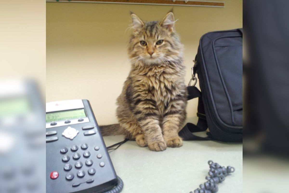 """Stray Kitten Wanders Into Office and Decides to """"Help""""..."""