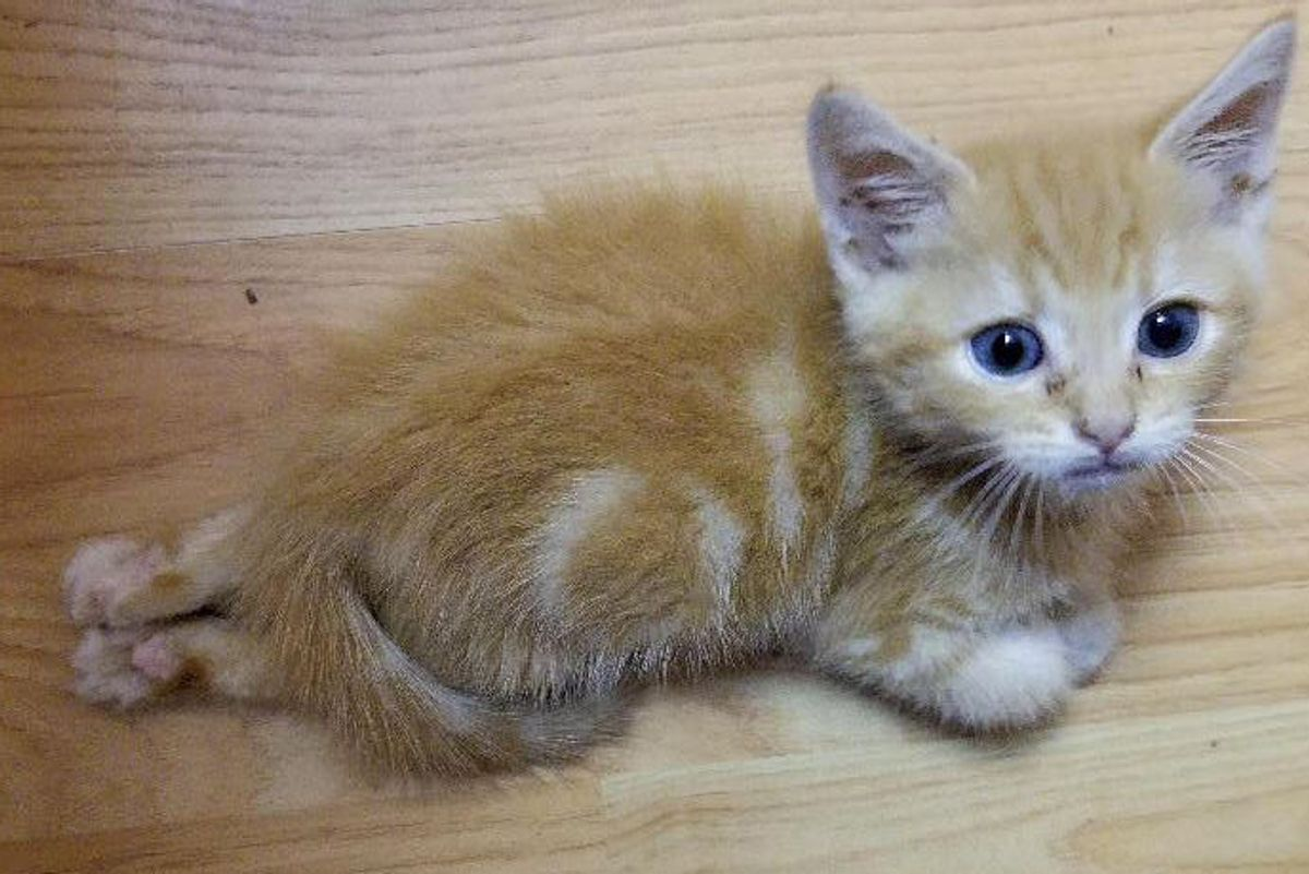 Kitten Can't Use His Back Legs But He Proves He Has So Much to Love...
