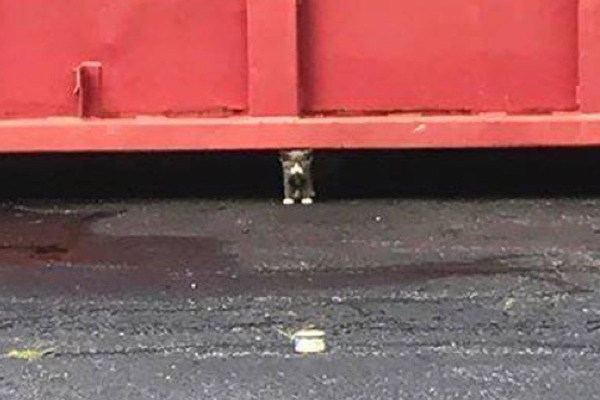 Kitten Comes Out From Underneath Large Dumpster Leads Rescuers to His Siblings...