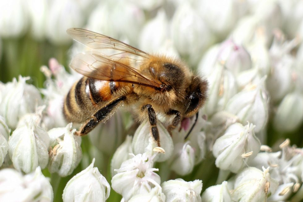 Bee Study Author Fights Back Against Bayer and Syngenta Accusations