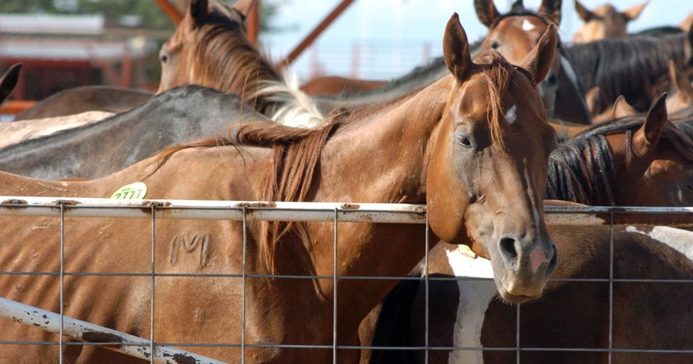 Robert Redford, Ed Harris, Elle Fanning to Congress: Oppose Mass Slaughter of Wild Horses