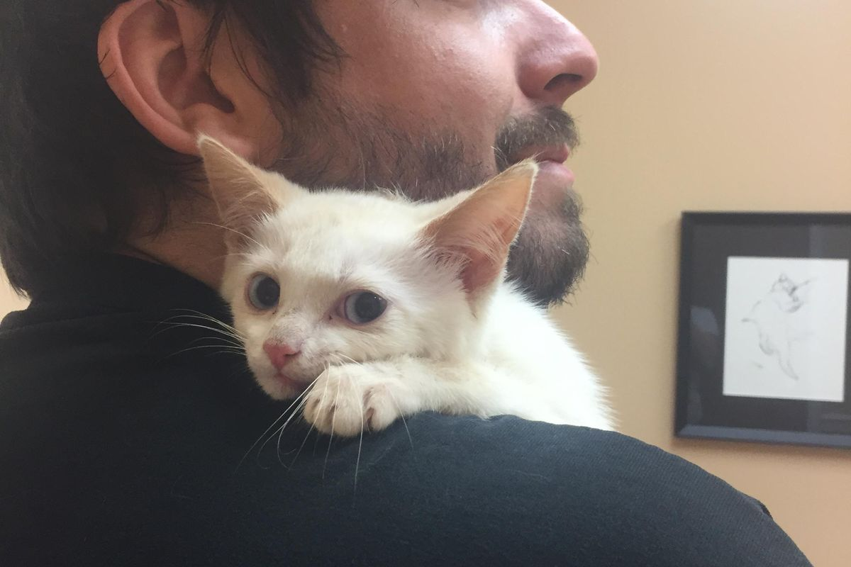 Kitten Found Left Behind is Terrified But a Few Pets Change Everything...