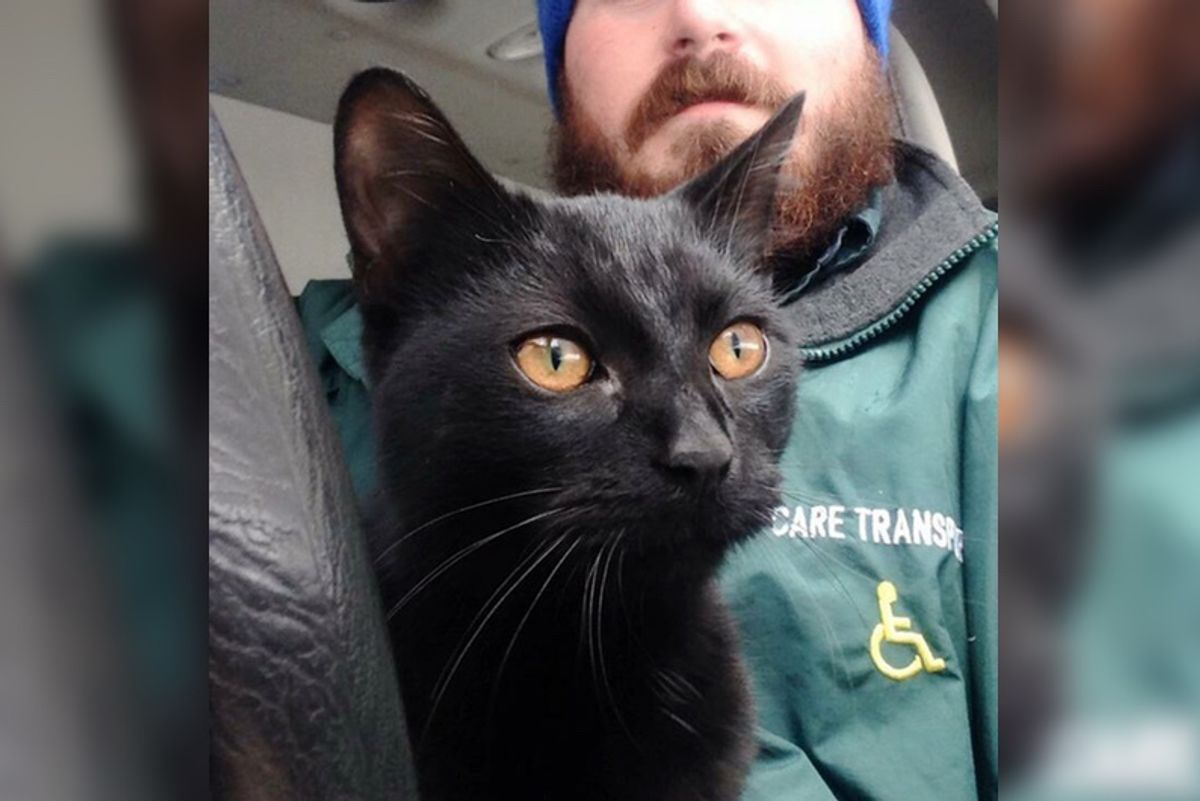 Cat Climbs Into Work Van and Decides This Man Will Be His Human...