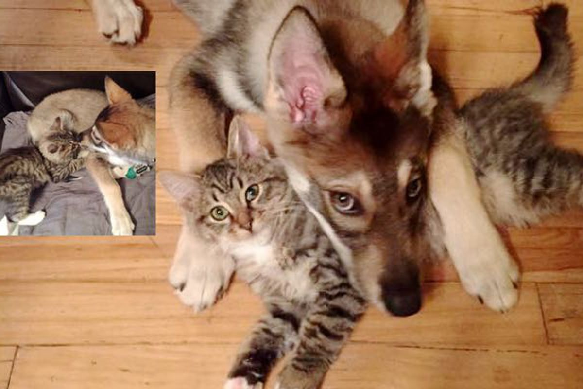 What They Get When They Let Their Puppy Pick Out a Kitten.
