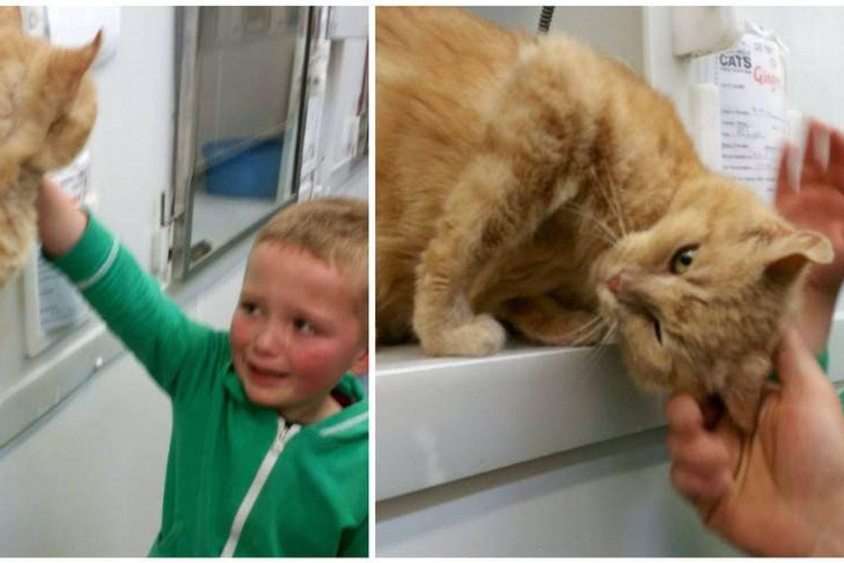 5-year-old Boy Burst into Tears When He Found His Long Lost Feline Friend..