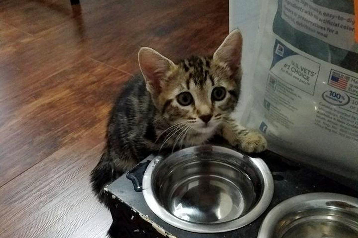 Man Found Kitten On His Doorstep Next to a Box, Meowing for Help, A Few Pets Later...