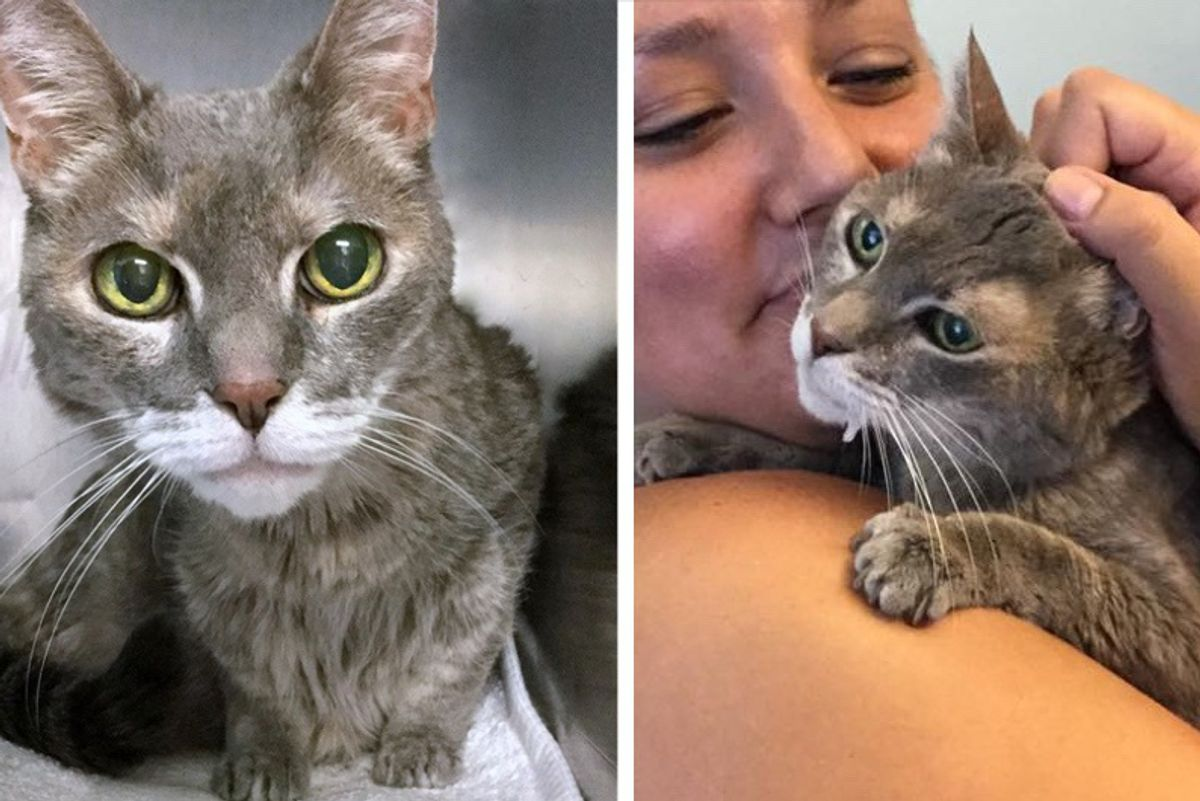 """Woman Asks for """"Least Adoptable"""" Cat and Finds 15 Year Old Blind, Deaf Kitty Waiting for Her..."""