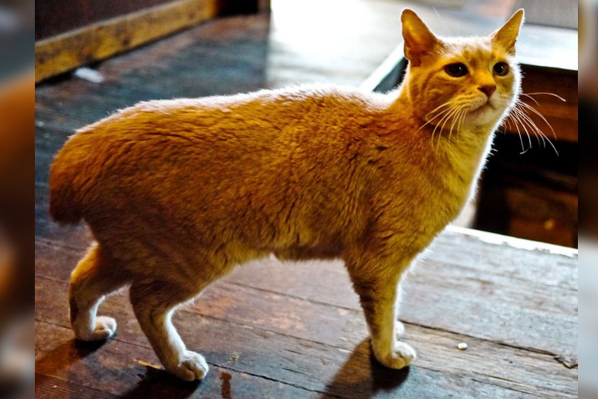 Mayor Cat Served Small Town for 20 Years Has Passed, Yet Left Incredible Legacy…