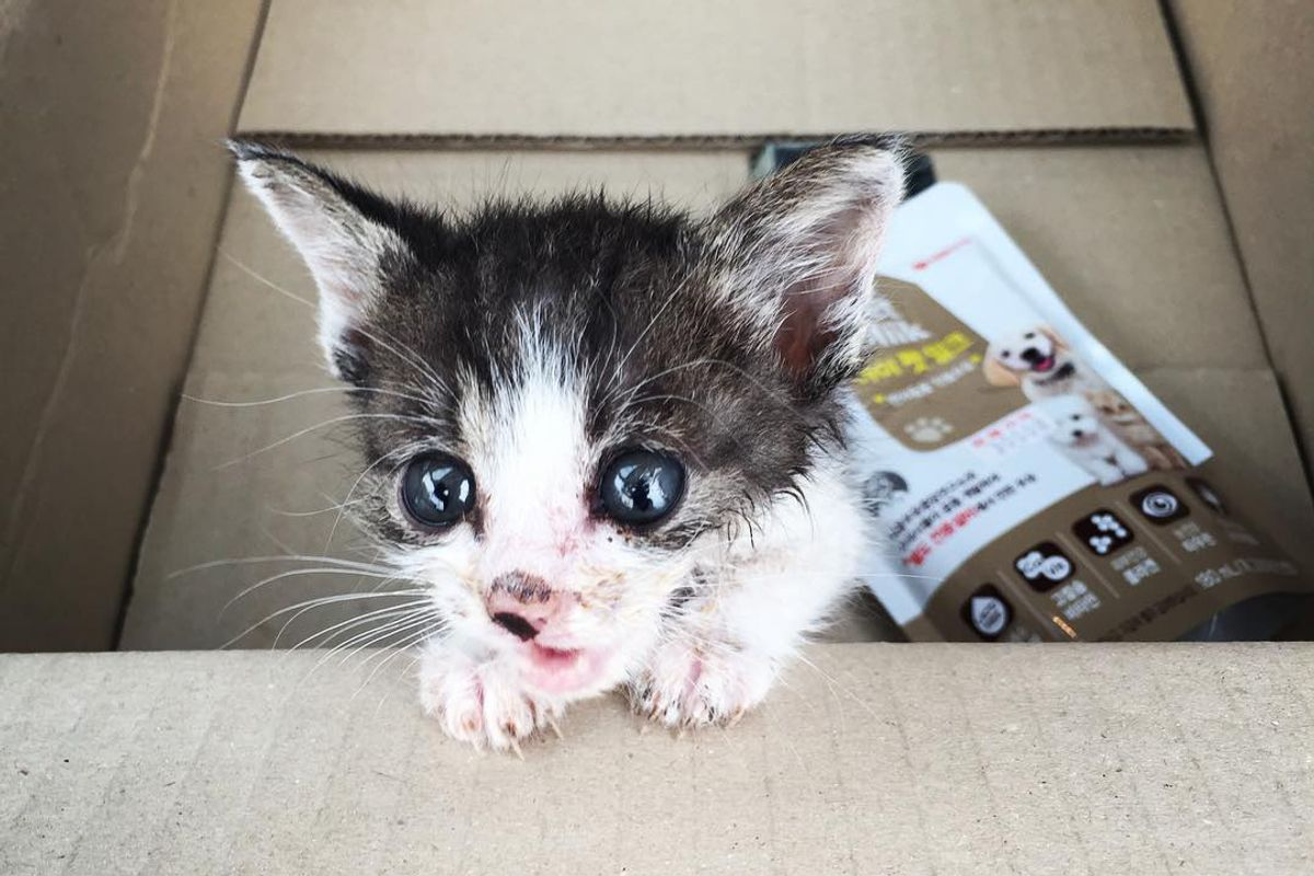 Orphaned Kitten Hobbles Up to a Couple Meowing for Love...