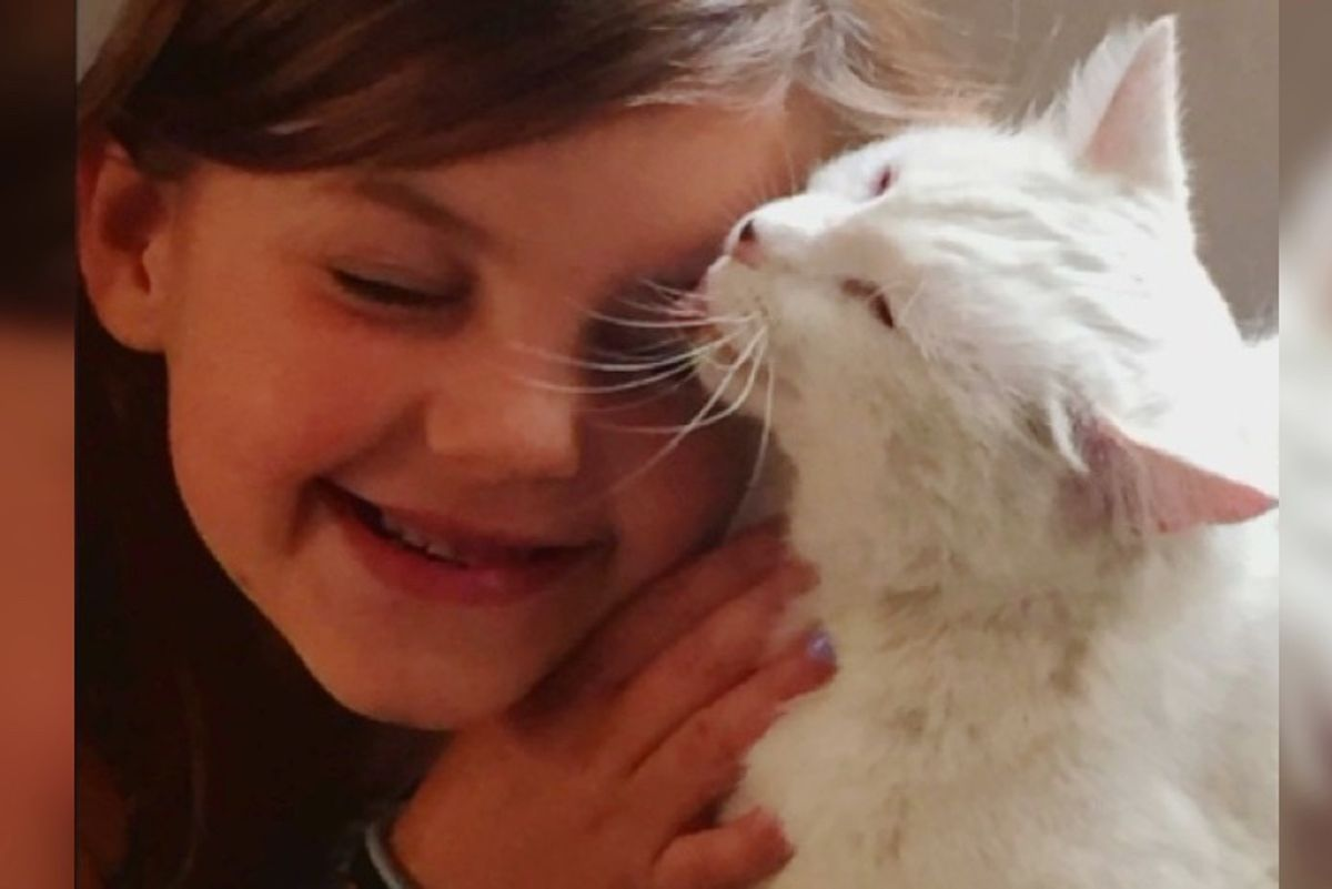 Cat Went Missing After Wildfire Hears Her Best Friend's Call and Comes Running..