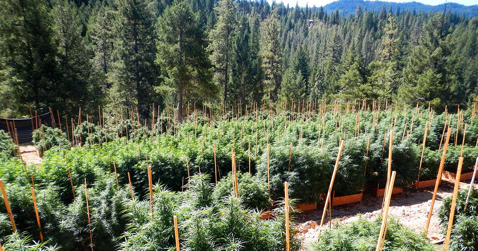 Stronger Protections for Wildlife Needed as California Marijuana Industry Grows