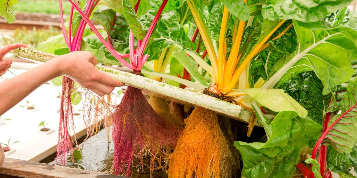 6 Innovative Farmers That Will Change Your Perception of What It Means to Grow Food