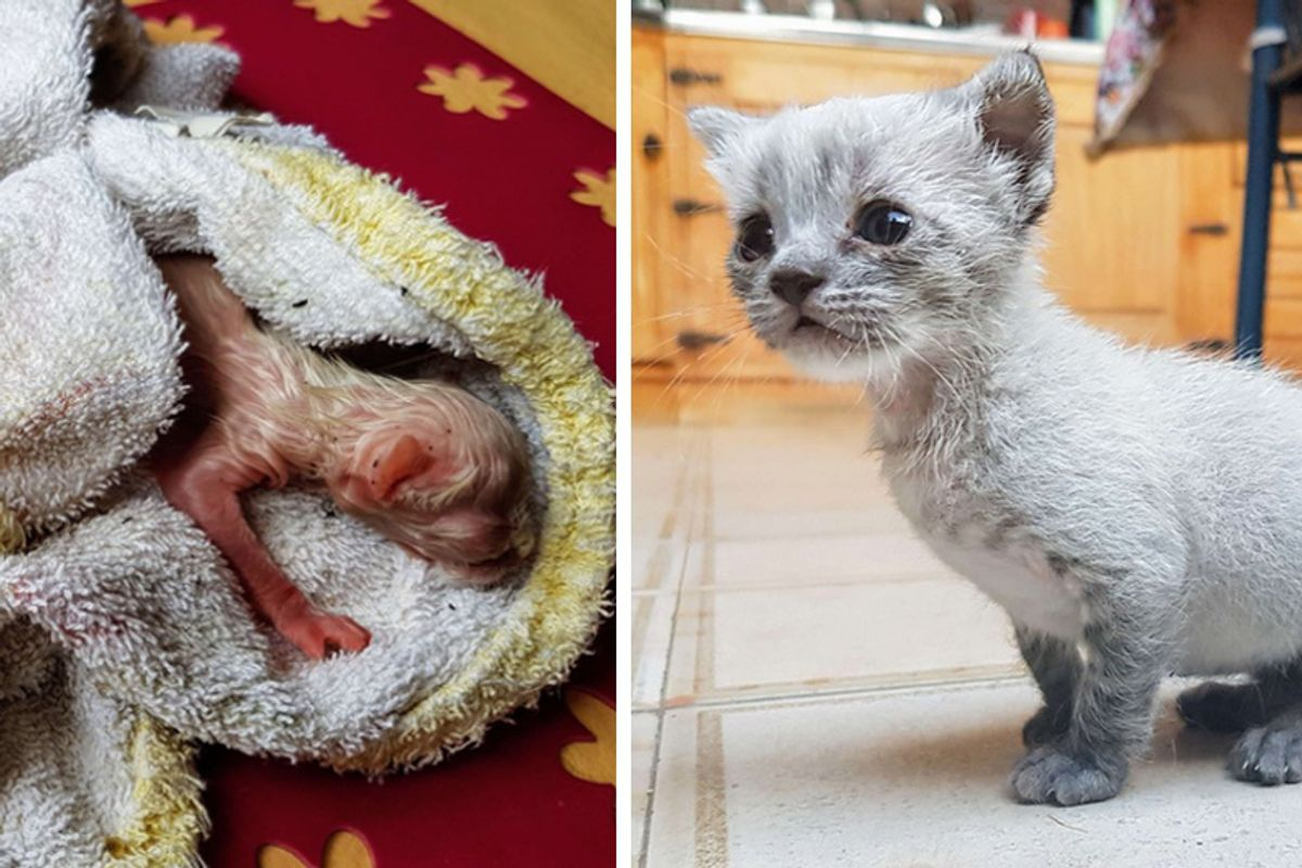 Kitten Found on Roof Meowing for Help Hours After Birth, Now 8 Months Later...
