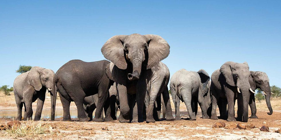 Poacher Accused of Poisoning More Than 100 Elephants Is Arrested After Four Years on the Run
