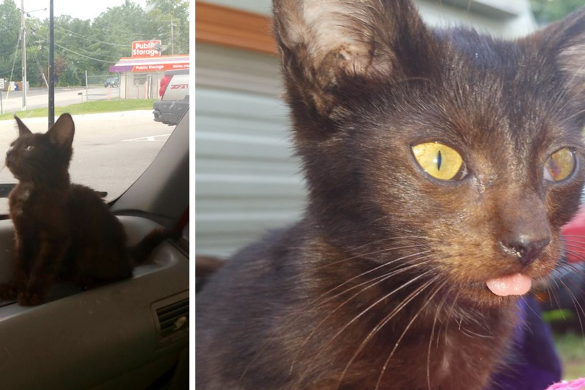 Campers Surprised to See Scrawny Kitten Running Up to Them Crying for Love...