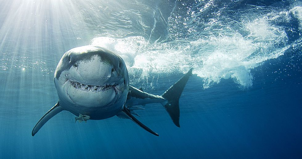 9 Facts That Will Change How You Think About Sharks