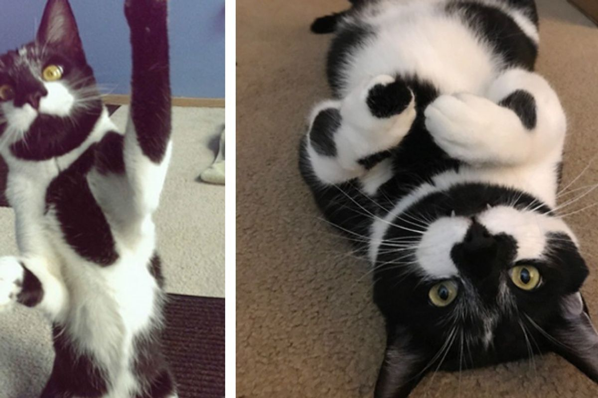 Cat No One Wanted Because He is 'Too Playful', Finds True Love...