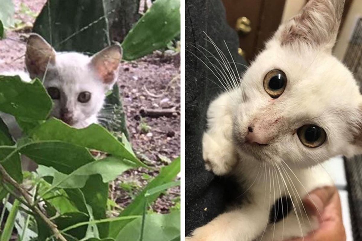 Shy Kitten Lived Under Mobile Home Cuddles for the First Time, It Changes Everything..