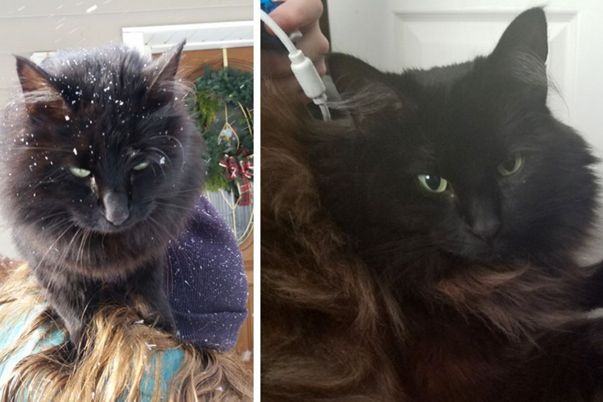 Stray Cat Jumps into Woman's Arms for Warmth Asking Her to Be Her Forever Human...