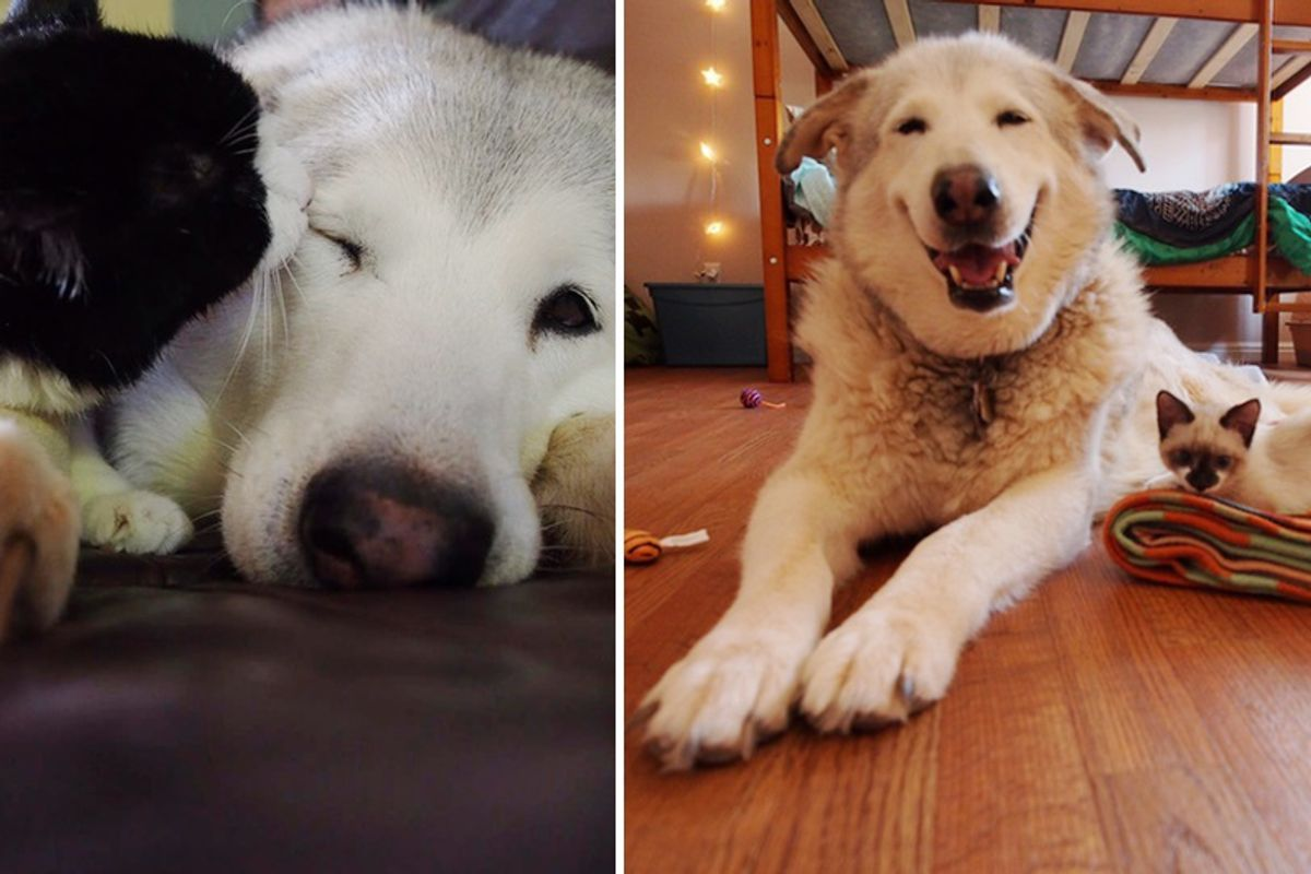 Four Foster Kittens Bring Smile Back to Lonely Dog Who Lost Her Best Friend...