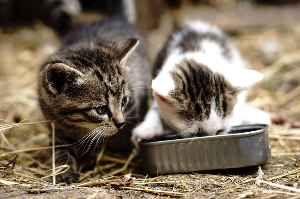 What You Need to Know About Cat and Dog Food