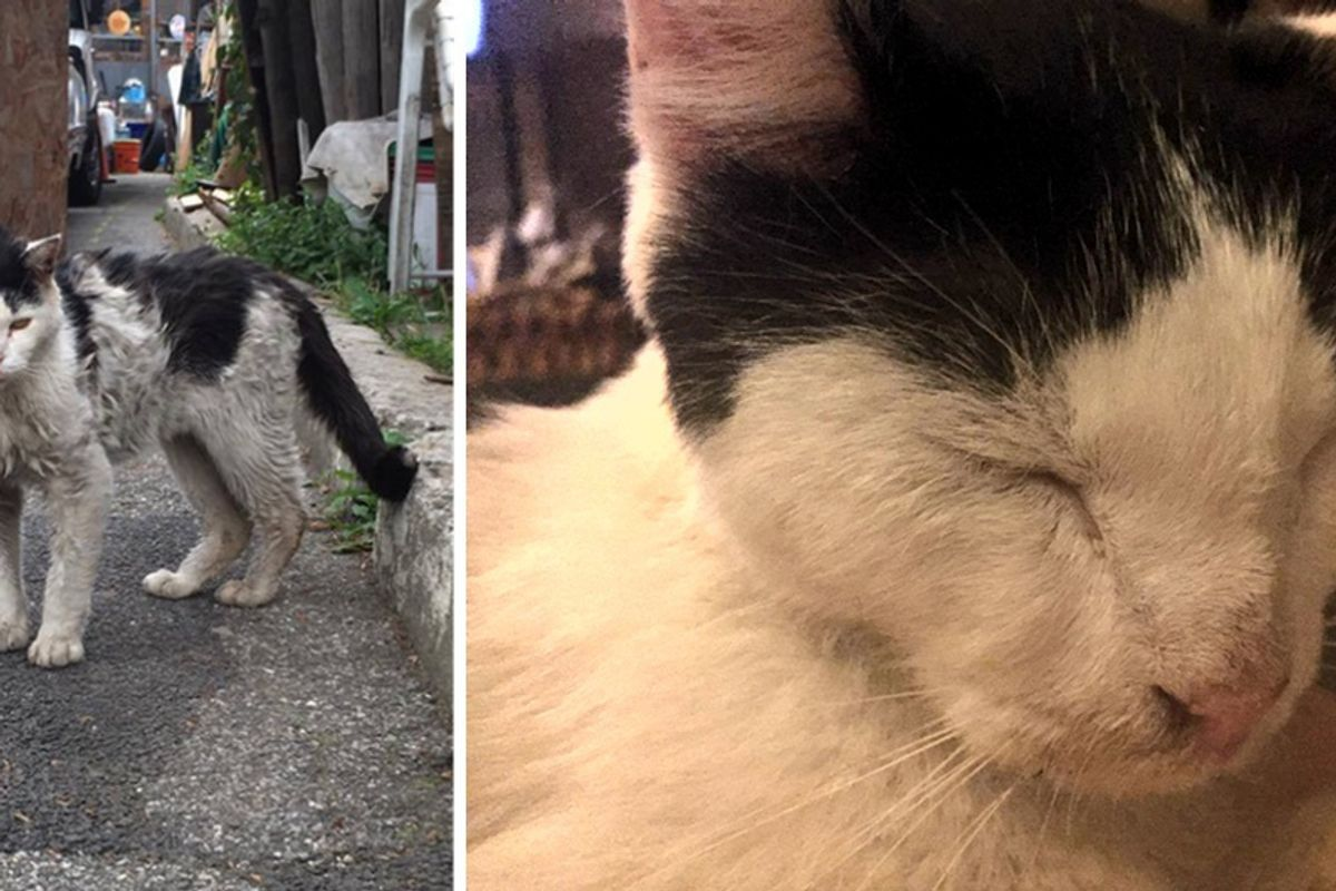 Scrawny Kitty Covered in Dirt, Hobbles Up to Woman Asking for Help...
