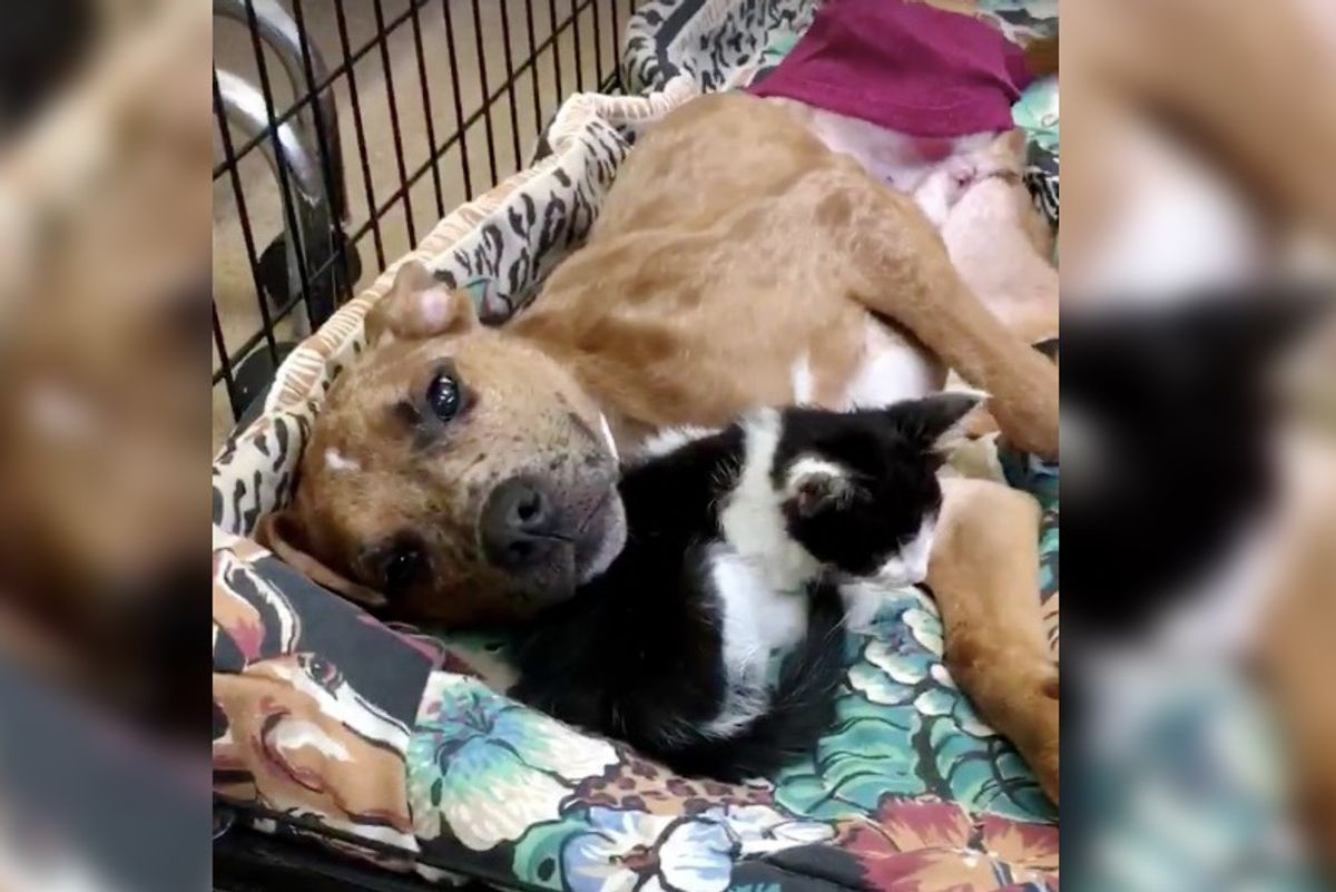 Sick Kitty Finds Comfort in Injured Dog and They Help Each Other Heal