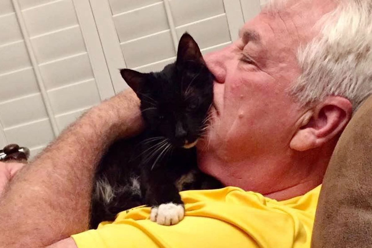 15-year-old Shelter Cat Tells His New Family How Happy He is To Be Back in a Home...